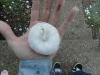 1amanda-hail-after-storm