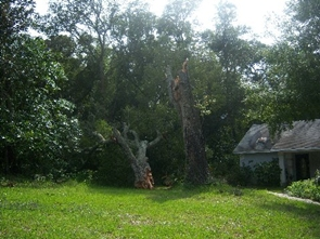 Several trees were lost to Fay