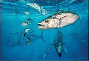 kingfish-recipe