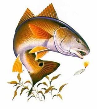 redfish_sm