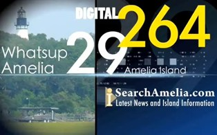 search-amelia-news