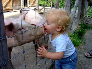Piggy Back?
