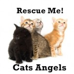Cats Angels Presents Rescue Me Fundraiser