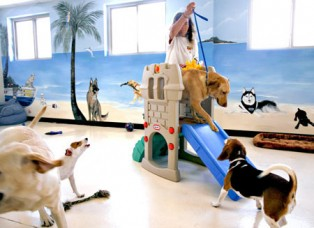 A Doggie Day Care Home Business