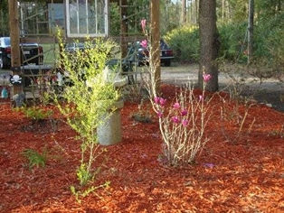Spring Has Sprung in Northeast Florida