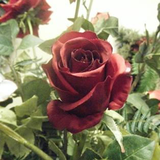 Artistic Florist has Award Winning Designers