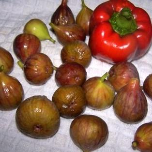 Figs are in Season on Amelia Island