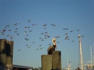Birds of Cumberland Island