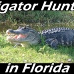 Alligator Hunting Season in Florida is Approaching