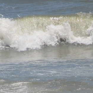 What Tourists Need to Know About Swimming off Amelia Island
