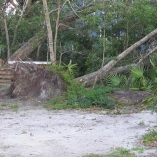 Nassau County to Pick Up TS Beryl Yard Debris