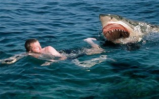 movie directed shark attacks