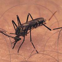 West Nile Virus Advisory for Florida