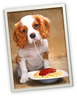 Eighth Annual Pasta for Paws