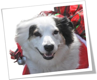 13th Annual Parade for Paws