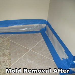 Hazardous Mold Removed by AdvantaClean