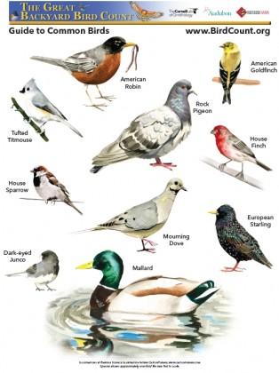 Great Backyard Bird Count is Going Global