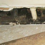 Why You Need a Mold Inspection before Buying a Home