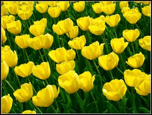 Bitcoins and Tulips