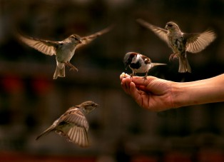 A Bird in the Hand is certainty