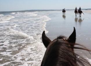 Atlanta Journal Gives Credits to Kelly Seahorse Ranch