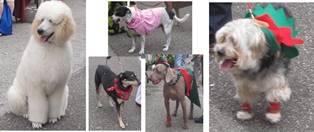 14th Annual Parade for Paws