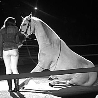 beloved-house-horse-lippizzaner