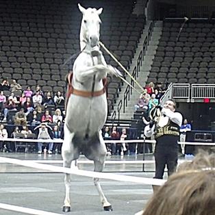 Gala of the Royal Horses Review