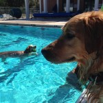 Doggies in the Pool at the Rec Center