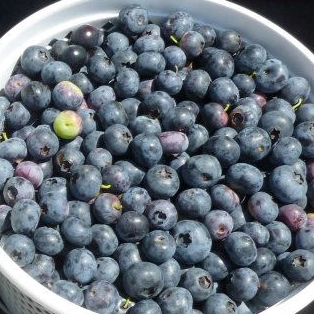 It's Blueberry Season at the Farmers Market