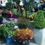 Plants, Granola and Pasta at Fernandina's Farmers Market