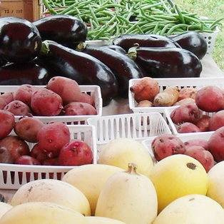 Autumn and Late Summer Harvest at Farmers Market