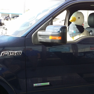 Aflac Duck loves the Ford F150 from Lilliston Ford