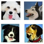 Artist Susan Sellner Paints Pets of Nassau County