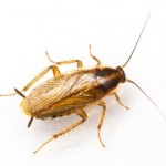 Common Pests, Allergies and Natural Prevention