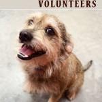Nassau Humane Society Seeks Volunteers