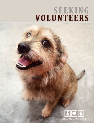 Nassau Humane Society Seeks Volunteers