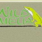 2015 Wild Amelia Nature Festival