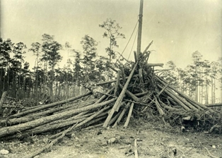 pine-tree-chemicals