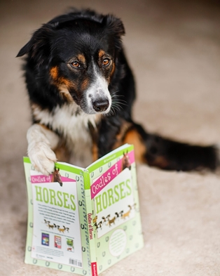 Book Loving Border Collie Raises Funds for Library