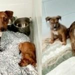 Special Dog Needs a Furever Home