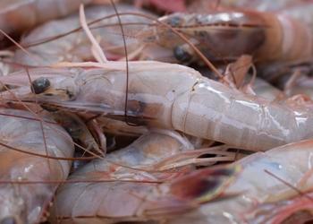 Get Super Bowl Shrimp at YOUR Super Farmers Market