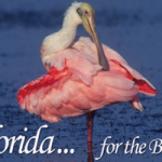 Florida - For the Birds