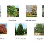 free-tree-event