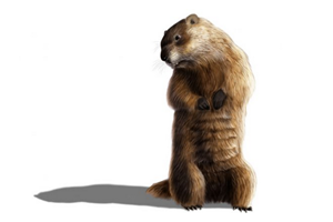 groundhog-candlemas