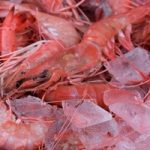 red-royal-shrimp-fernandina