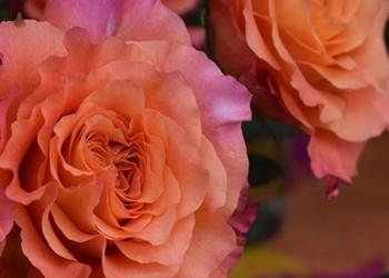 New Farmers Market flowers
