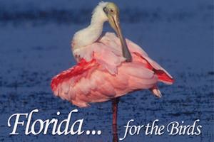 Florida - For the Birds