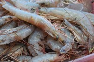 Atlantic white shrimp